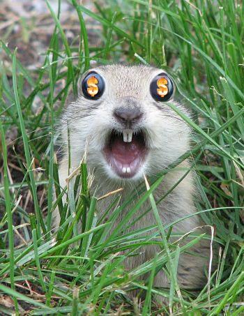 Ground_squirrel_annkelliot