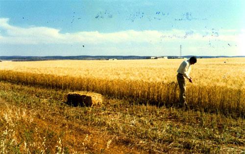 cereals1979-2s