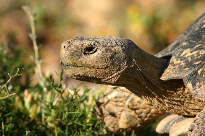 10 животни с невероятно дълъг живот