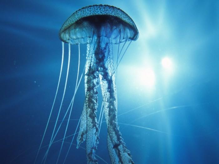 I-am-not-a-jellyfish-Im-an-alien-1024x768