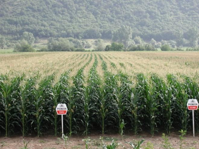 Полета с ГМО царевица на DuPont/Pioneer в България
