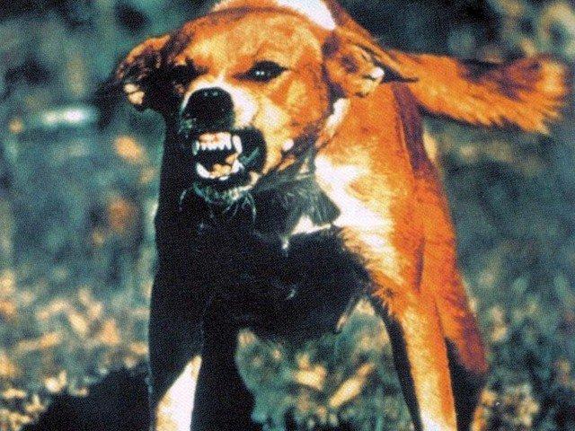 rabid-dog-640x480