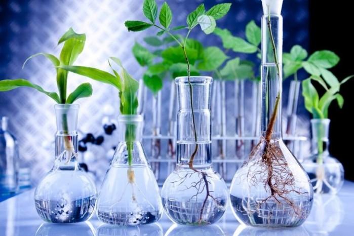 gmo-plants-810x540